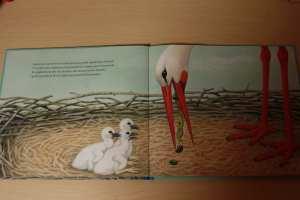 avis livre une année avec les cigognes thomas muller, migration des cigognes livre enfant blog planete parentage