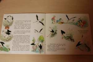 livre enfant cig la cigogne, migration cigogne lecture enfant blog planete parentage IEF